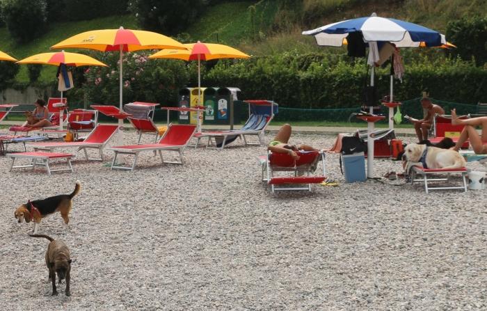 Italien Urlaub Mit Dem Hund Am Gardasee